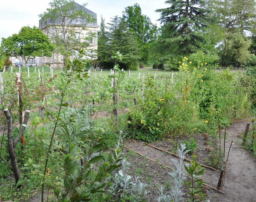 jardin-chateau-parc-poumey-gradignan-potager-allees-medieval